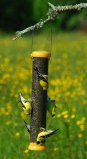 finch bird feeder goldfinches will feed upside down but house finches
