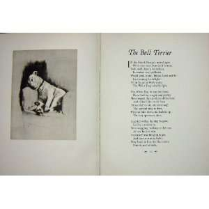1933 Bull Terrier Dog Pet Animal Poem Cecil Aldin
